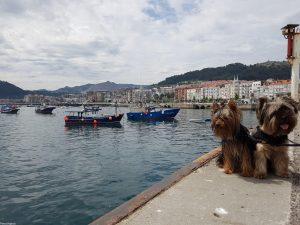 Castro Urdiales – Laredo – Santoña con perro