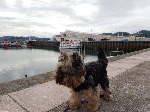 San Vicente de la Barquera y Suances con perro