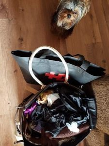 La maleta de viaje de tu perro