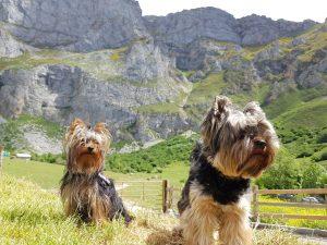 Picos de Europa y Potes con perro