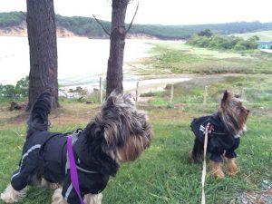 Cueva El Soplao y Avril en la Ría con perro