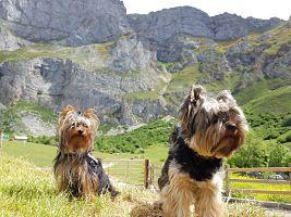 ▷ Cantabria con perro 😍 Los Mejores lugares para visitar en 2021