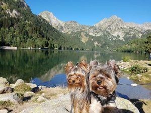 Escapada al pirineo de LLeida en Camper con perros