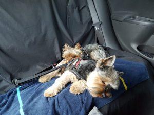 Consejos para viajar con perro en coche