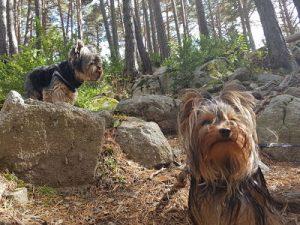 Andorra con perro | Mini guía