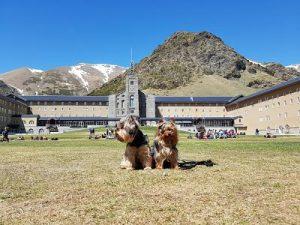 Vall de Núria con perro