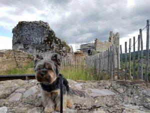 Albi con perro