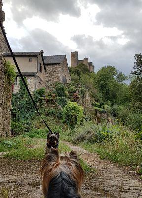 Aveyron con perro, najac