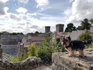 Aveyron con perro