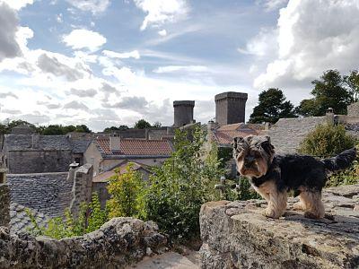 Aveyron con perro, couvertoirade
