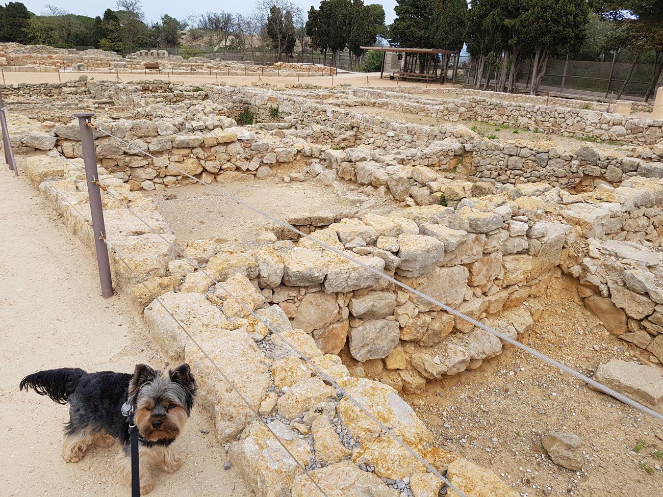 ruinas romanas con perro