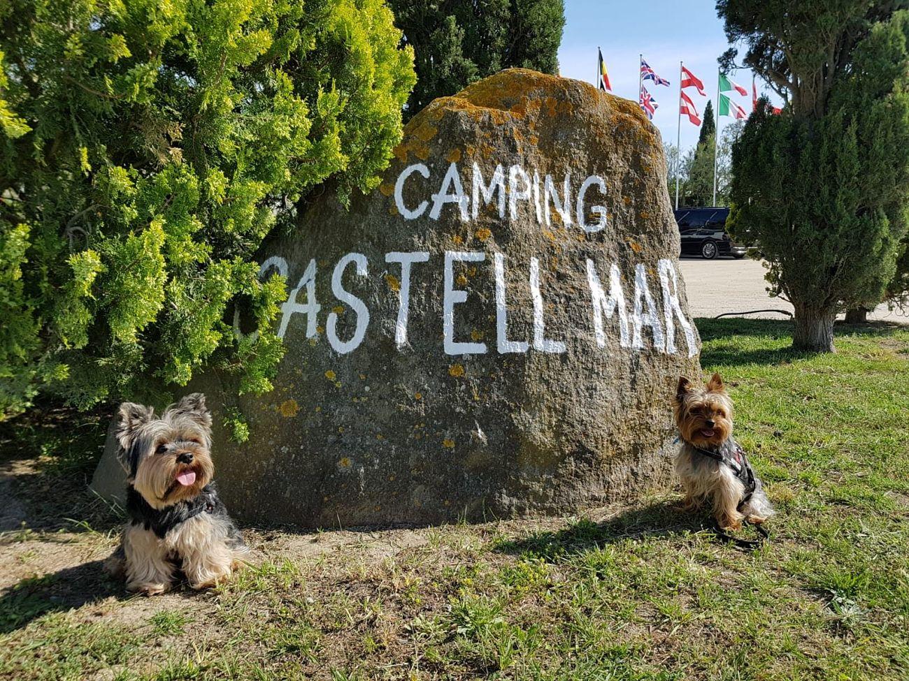 entrada camping castell mar con perro