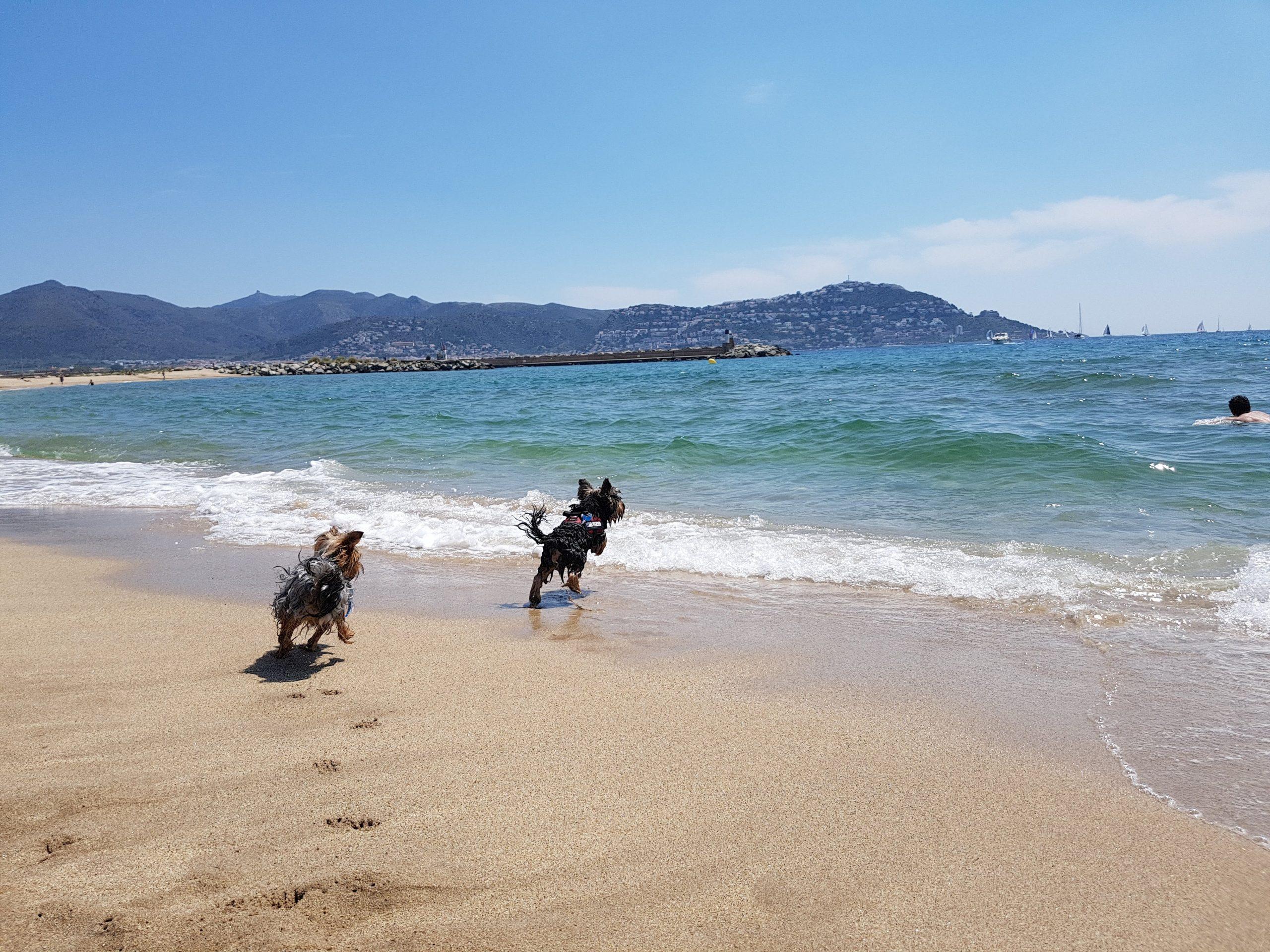 playa rubina