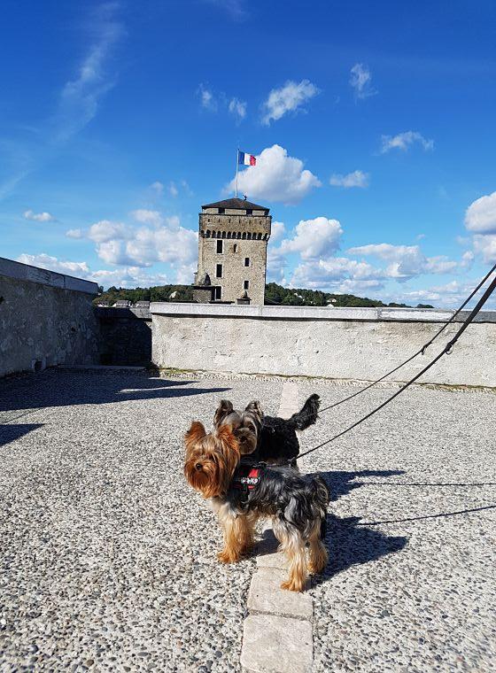 Lourdes con perro
