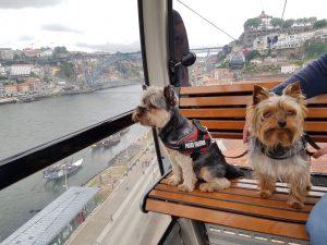 Transporte público en Oporto con perro