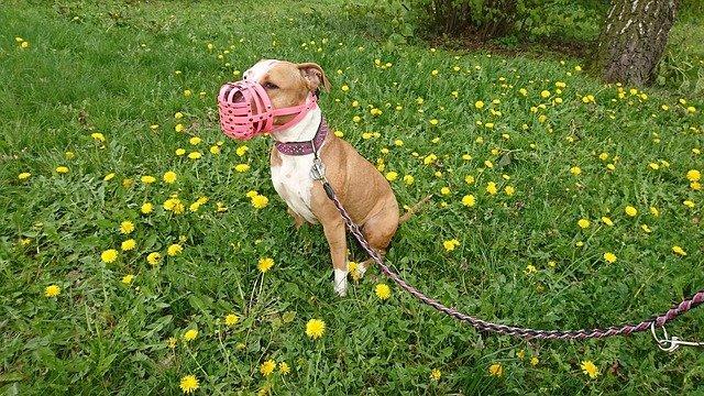 Perros prohibidos en Francia