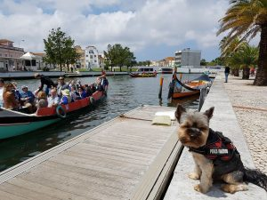 Visitar Aveiro con perro