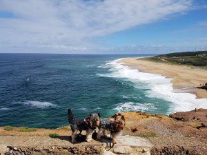 Road Trip por la costa de Portugal con perro