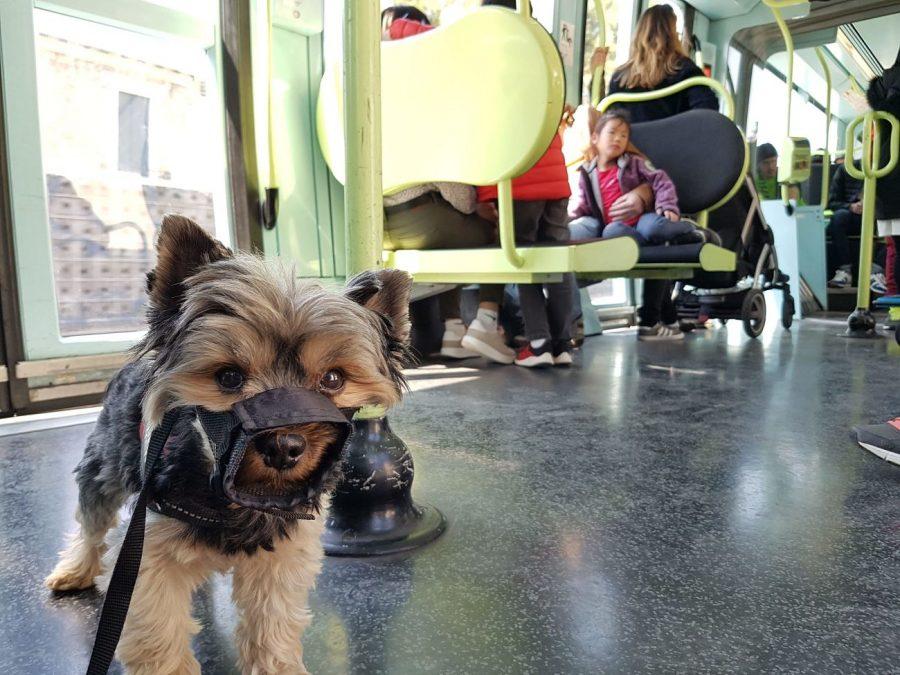 montpellier con perro