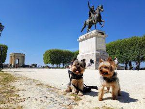 Guía para visitar Montpellier con perro