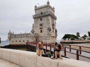 Lisboa con perro 🐕 Guía completa