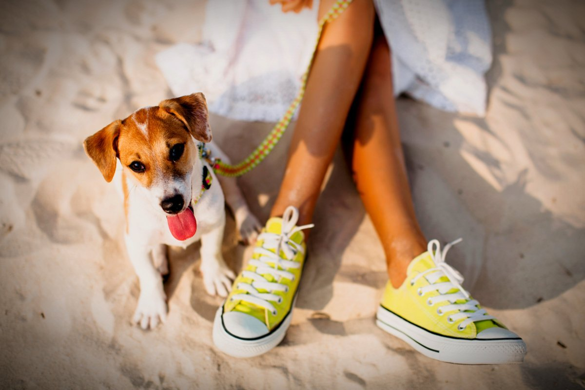 Andalucía con perro en la playa