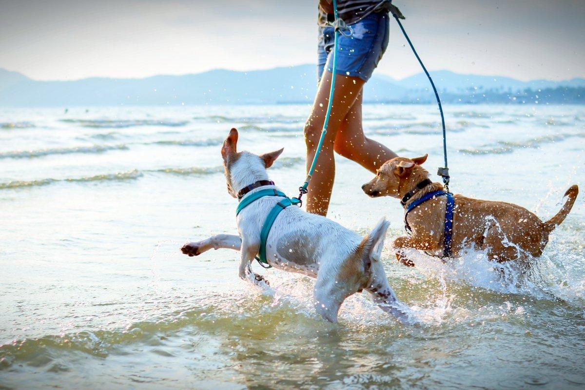 Perros mojandose en la playa