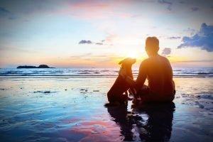 Andalucía con perro 🏖️ Guía completa