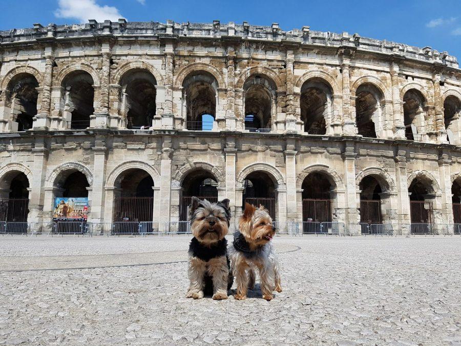 las arenas con perro nimes
