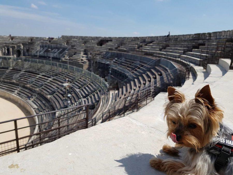 las arenas nimes con perro