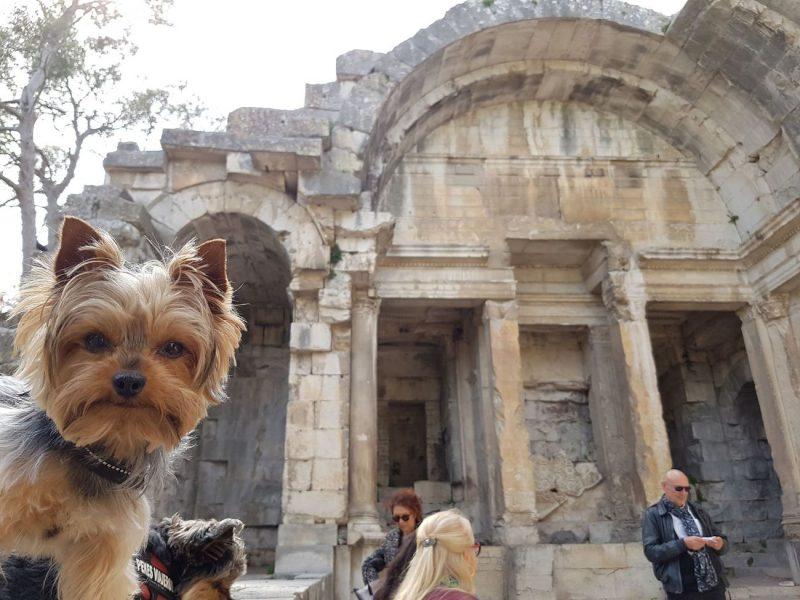 templo diana nimes con perro