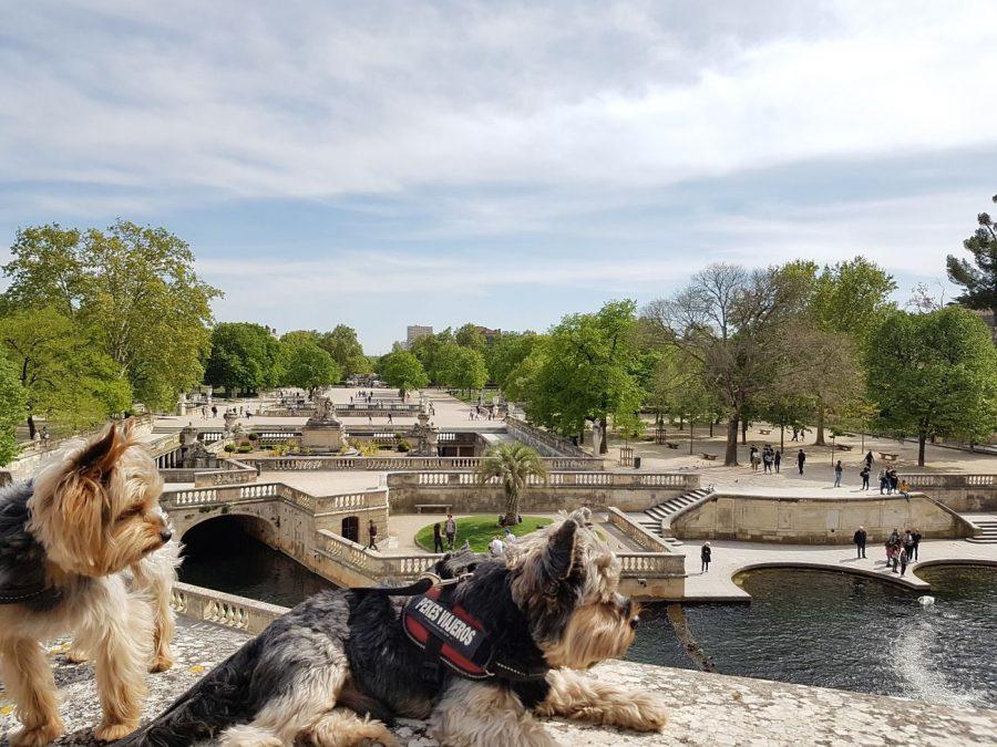 jardin fontaine nimes con perro