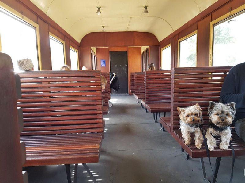 tren a vapor con perro nimes