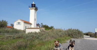 la camarga con perro pekes viajeros