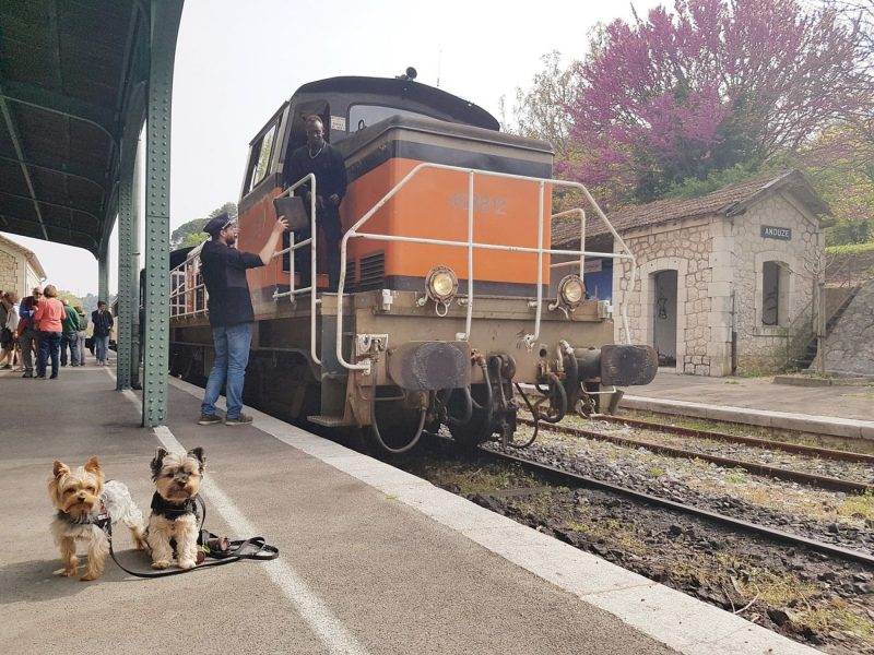 tren a vapor con perro