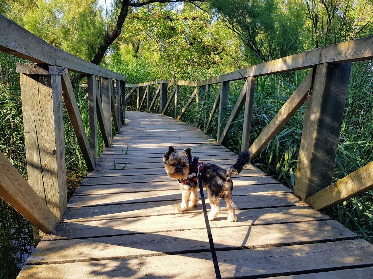 parque aiguamolls con perro cerca del camping