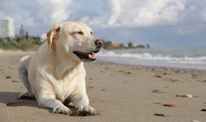 Playas para perros en Portugal 2021 🏖️