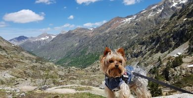 Tren de Artous con perro 6 - Pekes Viajeros