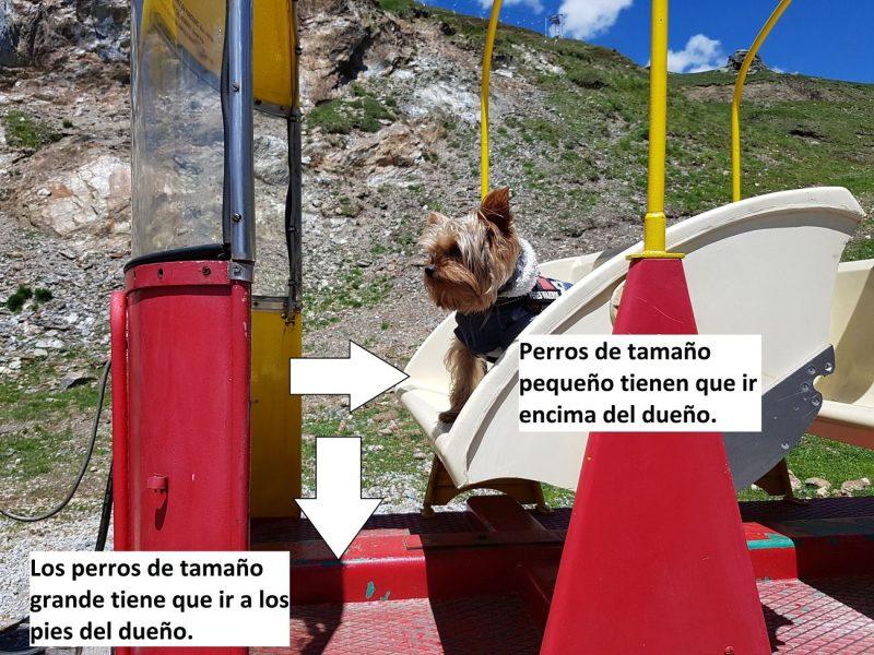 Tren de Artouste con perro