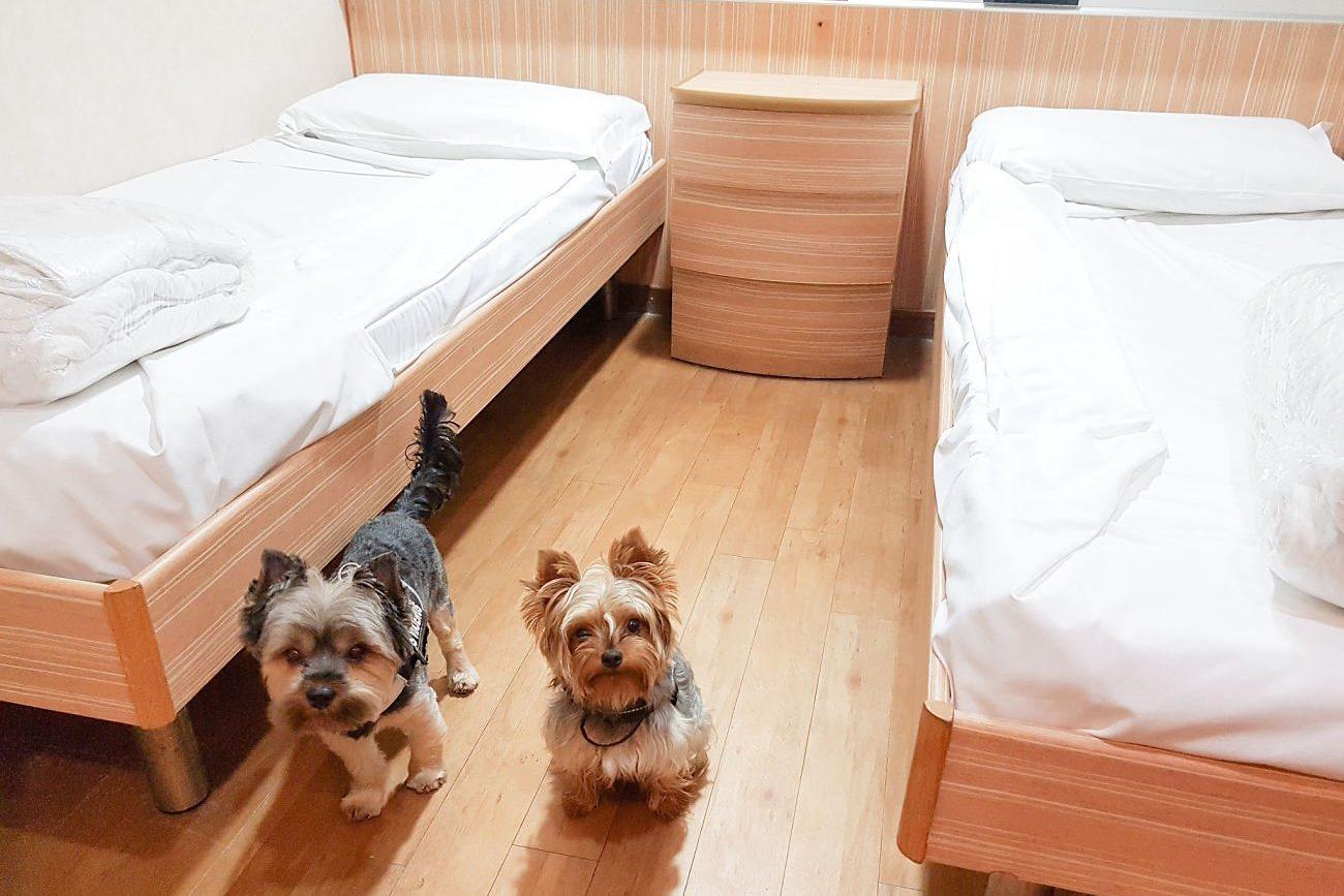 Grimaldi lines con perro