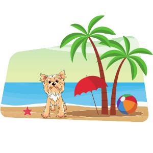Accesorios para tu perro en la playa 🏖️ Guía completa