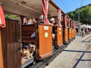 Tren de Larrun con perro