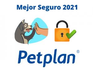 Mejor seguro para perros 2021 🥇 PETPLAN