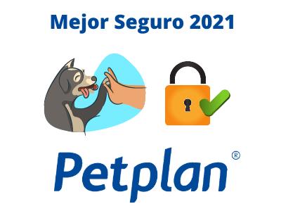 mejor seguro para perros 2021