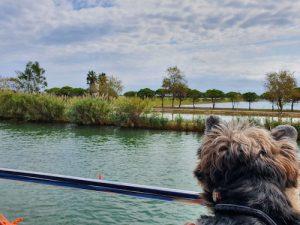 Delta del Ebro con perro – Miniguía