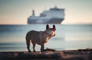 Viajar con perro en barco ✅ Guía completa