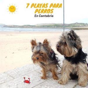 8 playas para ir con perro en Cantabria 🥇