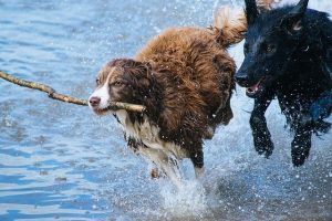 Piscinas naturales con perro en Madrid