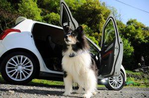 Viajar con perro en coche ✅ Guía completa